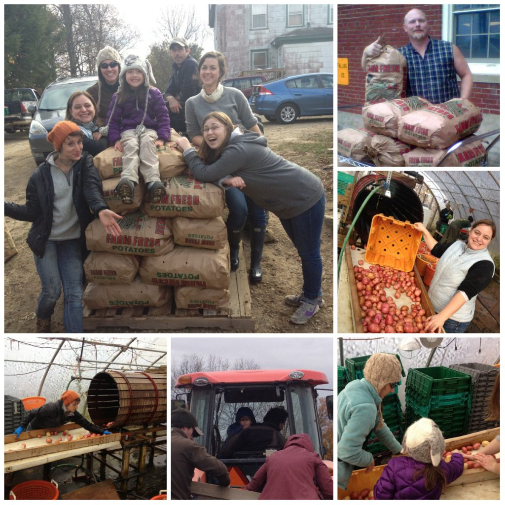 gleaning food donations Heron Pond Farm