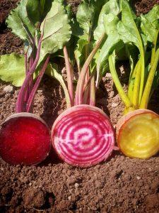 3_varieties_of_beets