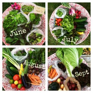 Seasonally Available CSA Share foods from Stout Oak Farm in Brentwood