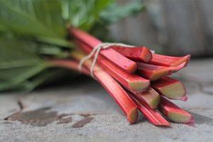 rhubarb-header